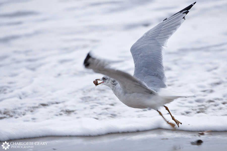 Seagull on the beach in Corolla, NC | Photo by Charlotte Geary