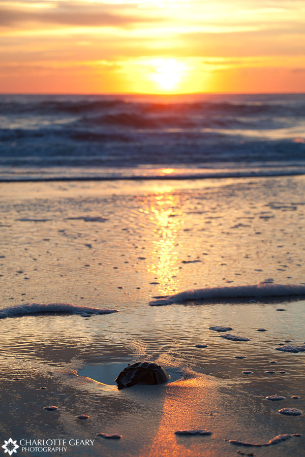 Horseshoe crab at sunrise in Corolla, NC | Photo by Charlotte Geary