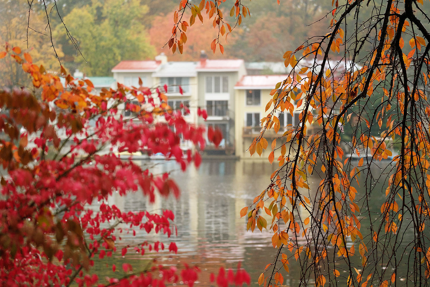 Fall leaves at Lake Anne in Reston, Virginia