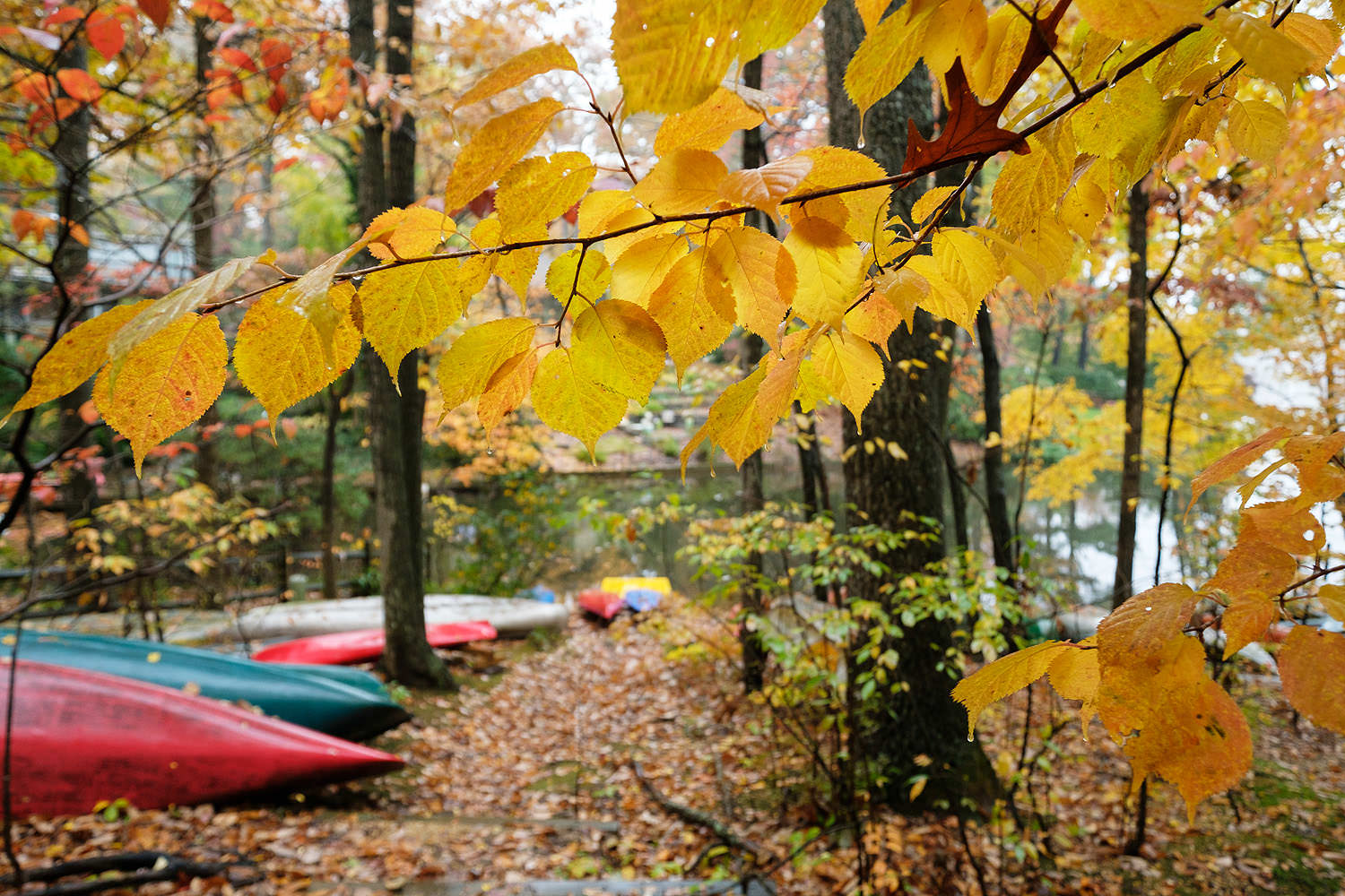 Fall at Lake Anne in Reston, virginia