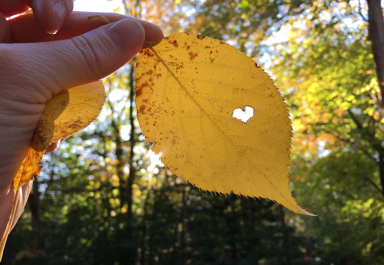 Heart in a fall leaf