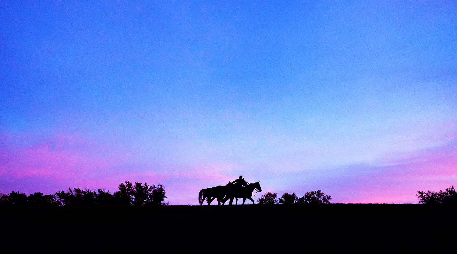 Horses at sunset in Virginia