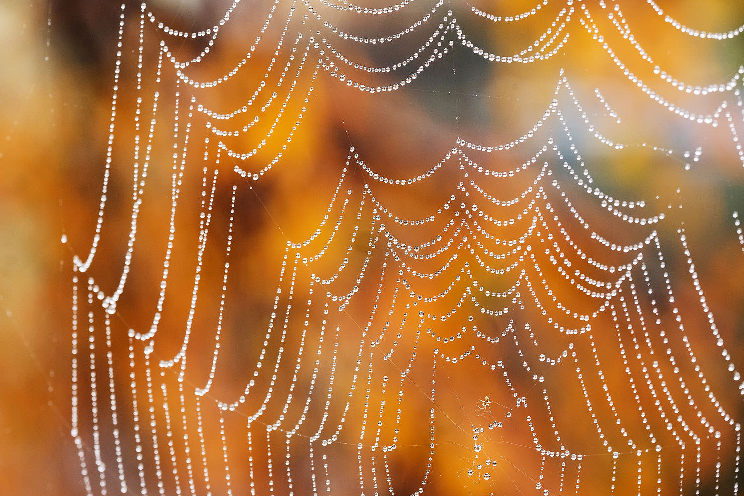 Raindrops on a spider web in the fall