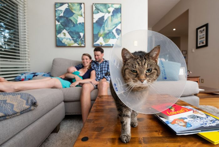 Cat in cone collar | Documentary family photography