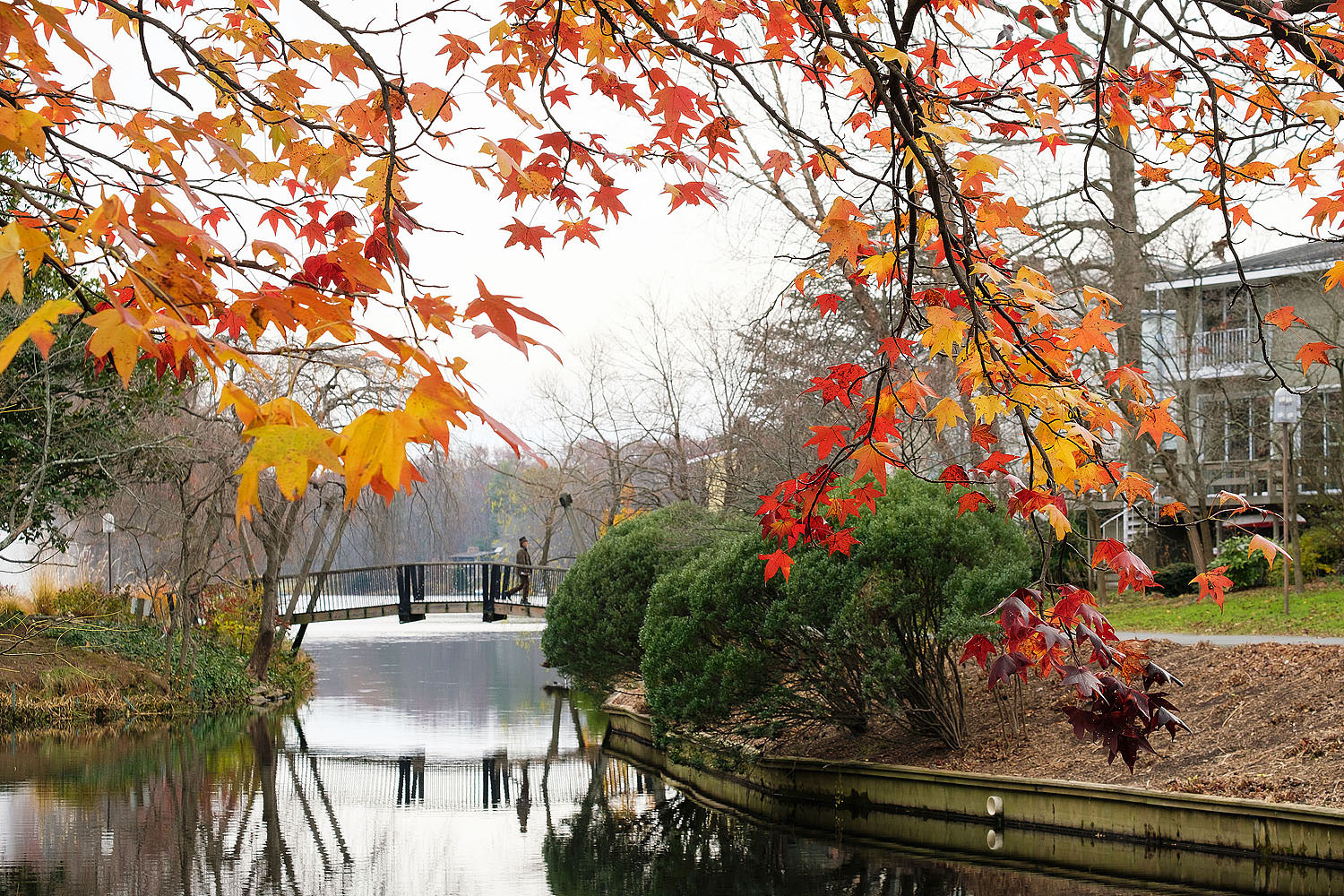 The Van Gogh Bridge at Lake Anne | Reston, Virginia