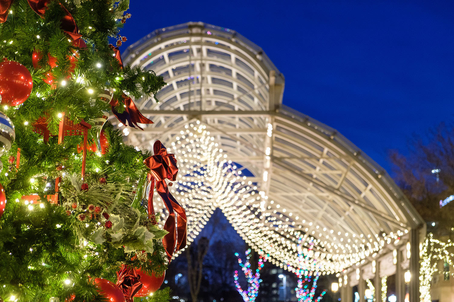 Reston Town Center during the holidays | Reston, Virginia