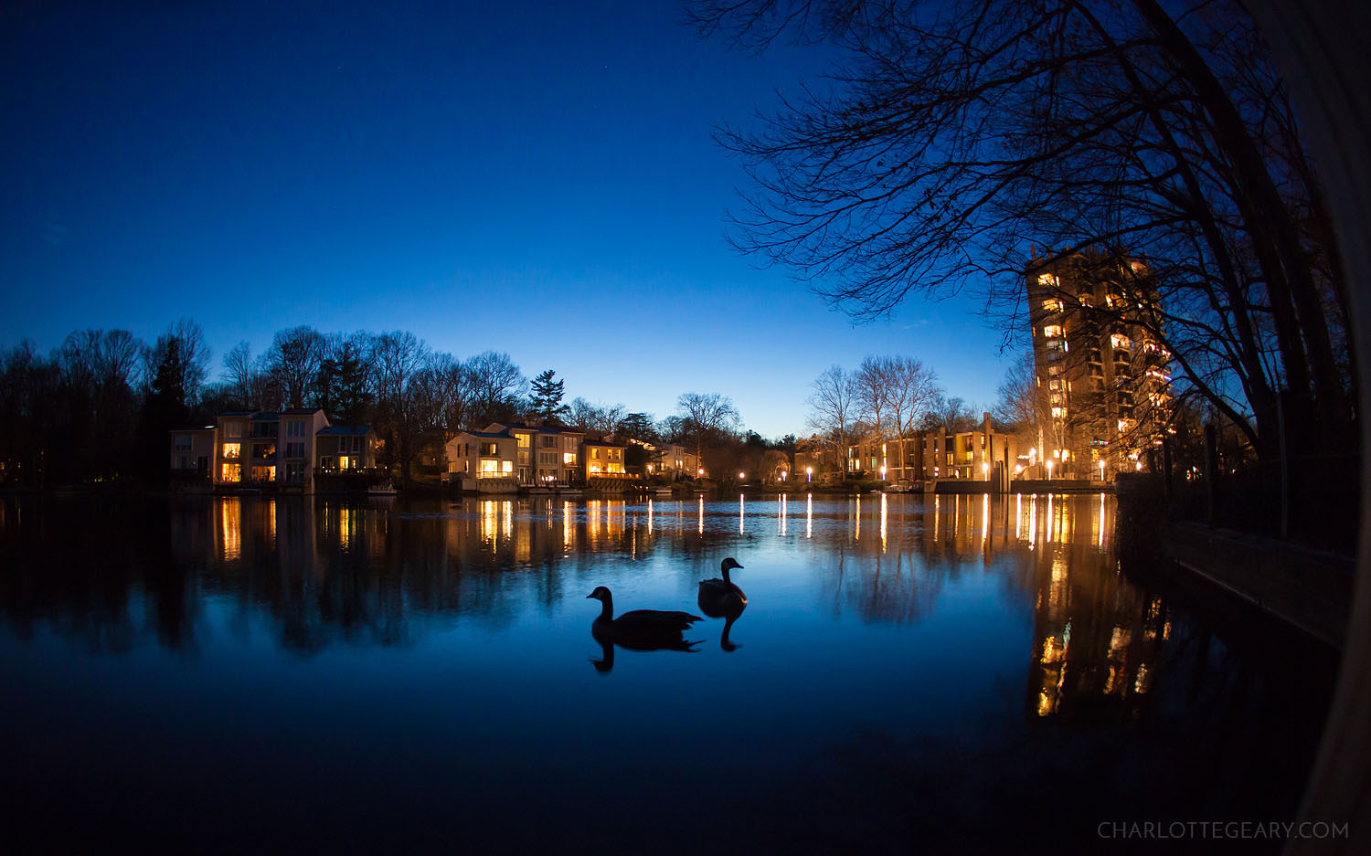 Geese on Lake Anne in Reston