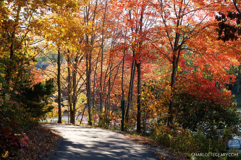 The trail along Lake Audubon in Reston, Virginia