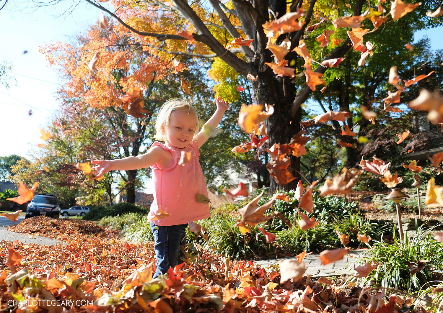 Childhood leaf magic in Annandale, Virginia
