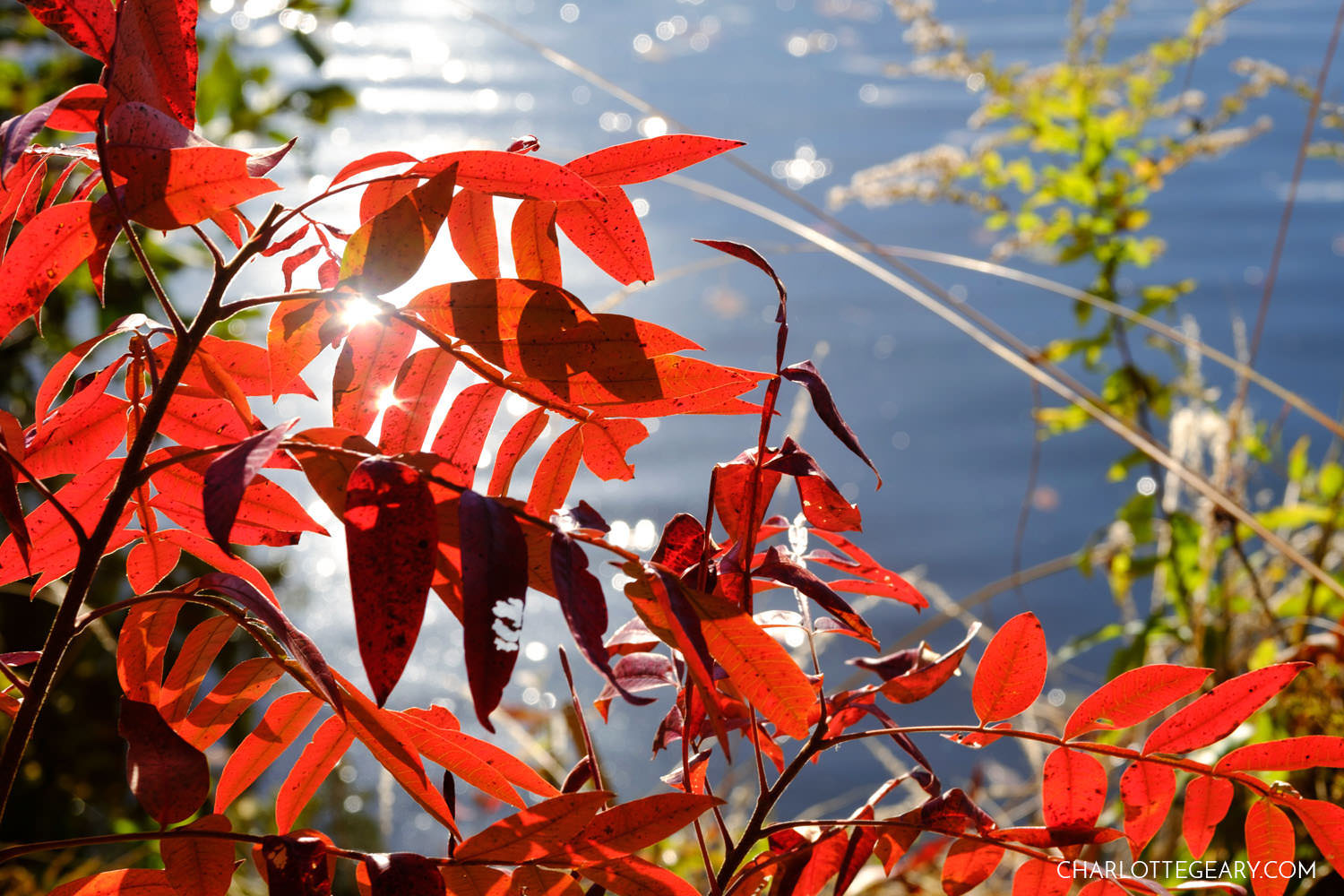 Vibrant red at Lake Audubon in Reston