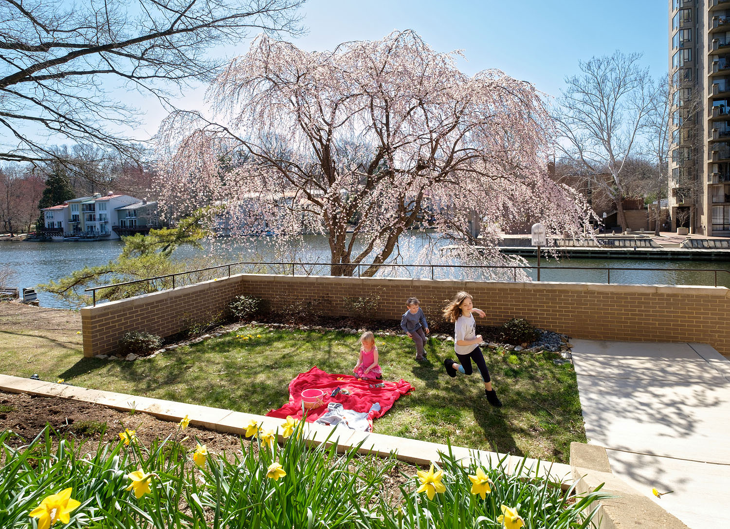 Cherry blossom picnic at Lake Anne in Reston, Virginia