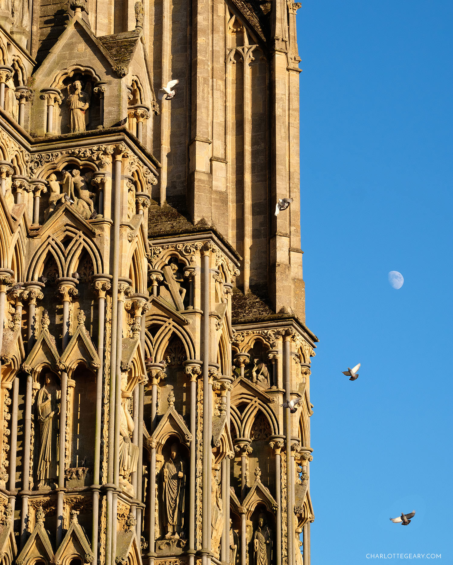 Wells Cathedral birds and moon
