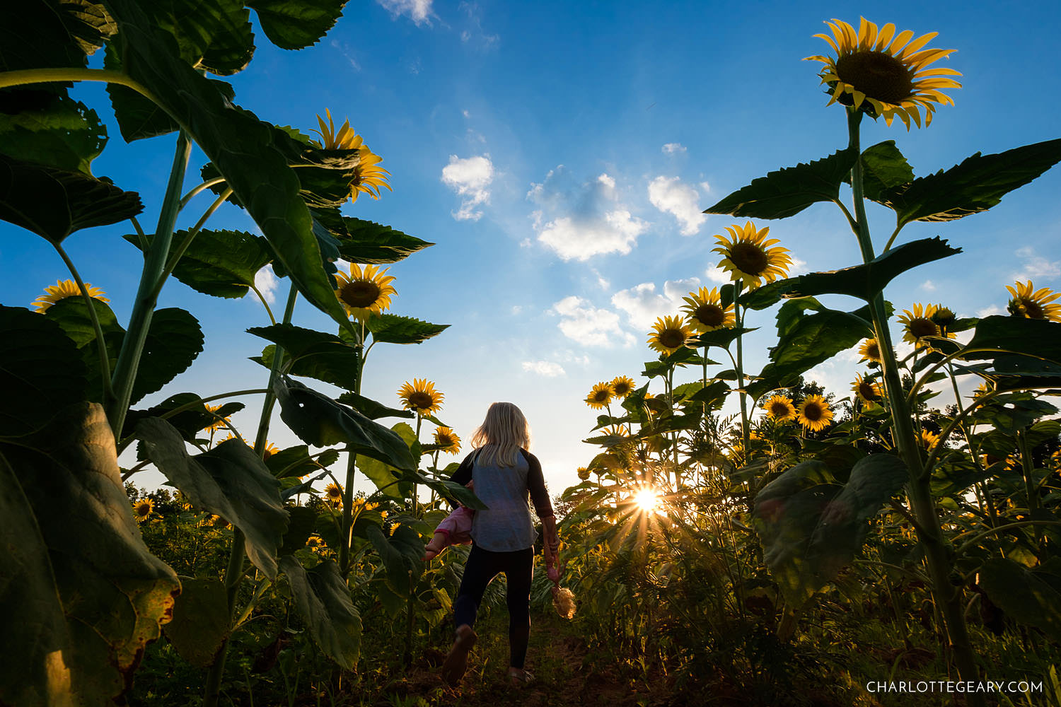 child in sunflower field