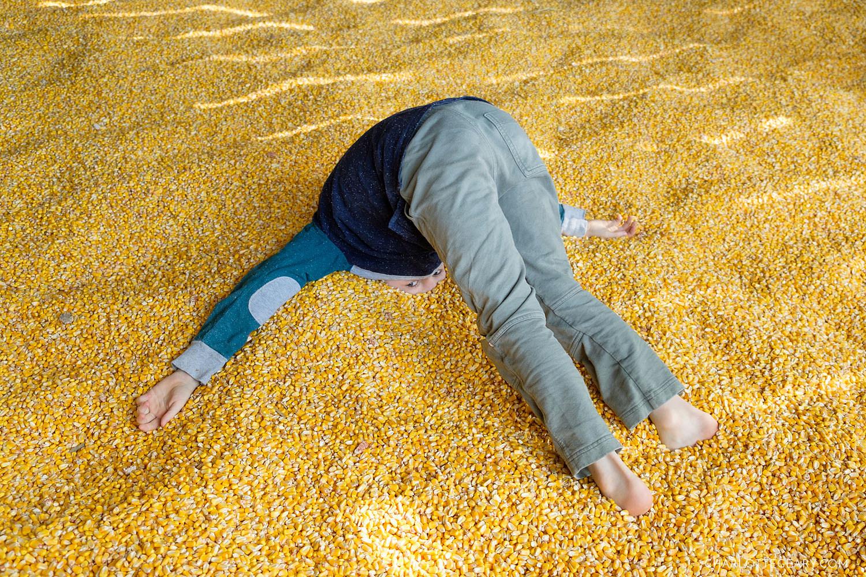 Krop's Crops corn