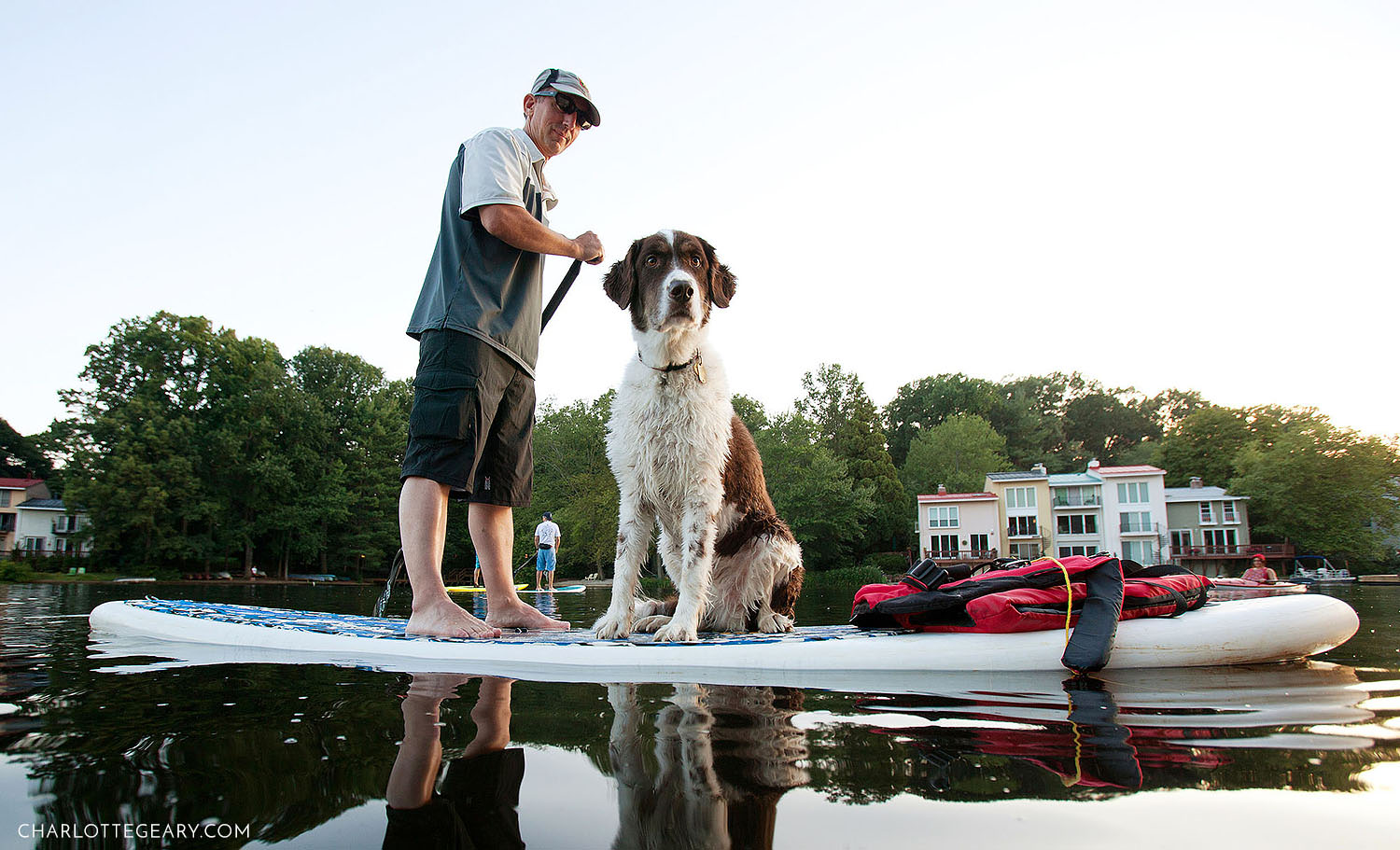 Dog paddleboarding at Lake Anne in Reston, Virginia