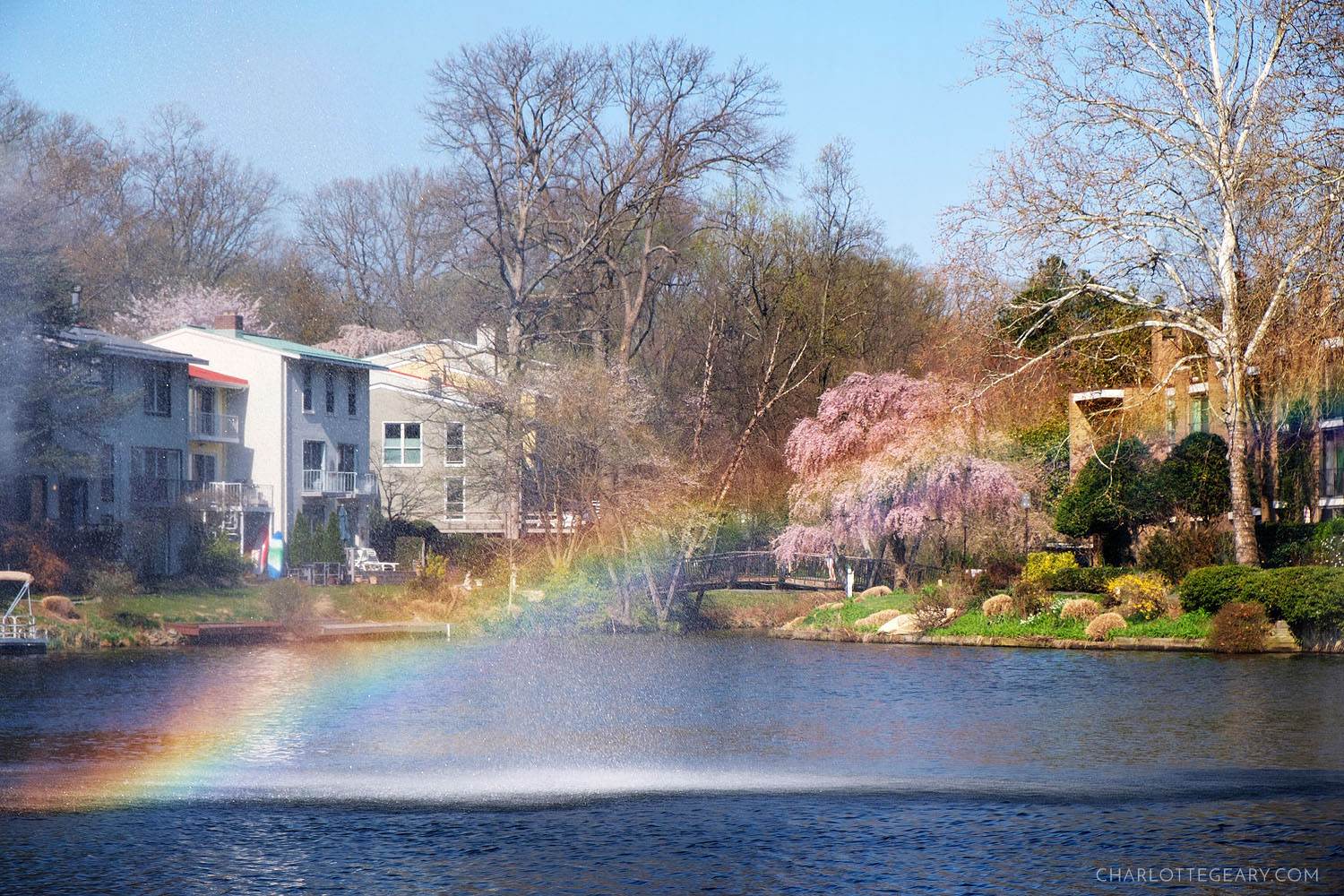 Rainbow and cherry blossoms over Lake Anne in Reston, Virginia
